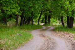 The road to the edge of the forest. Winding, dirt road. Disappearing into the depths of oak forests Royalty Free Stock Photo