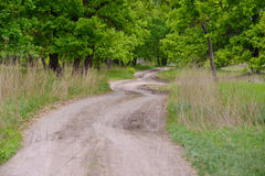 The road to the edge of the forest. Winding, dirt road. Disappearing into the depths of oak forests Stock Image