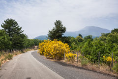 Road to Etna, with volcano in background, Sicily, Royalty Free Stock Photo