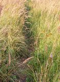 Road to fall among grass Stock Photography