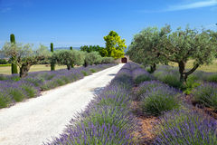 The road to farm in Provence Royalty Free Stock Image