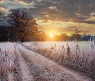 Road to the field amid grass covered with white frost and majestic yellow oak. royalty free stock photography