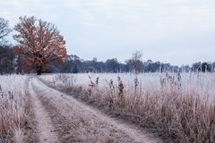 Road to the field amid grass covered with white frost and majestic yellow oak. Late fall stock photography