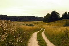 Road to a field, rural. Landscape Stock Photos