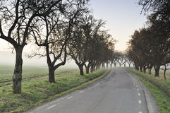 Road in to the fog Royalty Free Stock Images