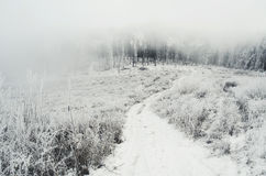 Road to foggy winter forest with snow Royalty Free Stock Photos