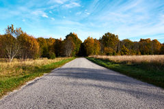 Road to forest Stock Image