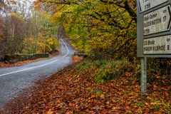 Road to the forest. This is a road to a forest in Ireland, it was captured near Blessington Stock Photos