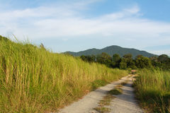 The road to the forest and mountains. With Sky Royalty Free Stock Photography