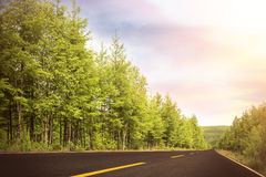 Road to the forest Royalty Free Stock Photo