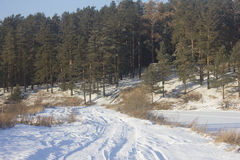 Road to the forest. Photo of winter road through the pine forest Royalty Free Stock Images