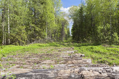 Road to the forest plots, paved logs Stock Photos