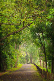 Road to forest, Thailand Royalty Free Stock Images