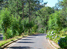 The road to the garden at resort in Dalat, Vietnam Royalty Free Stock Photo