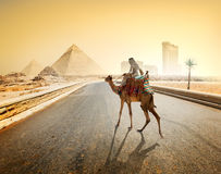 Road to Giza. Bedouin and camel on asphalted road to Giza and pyramids Royalty Free Stock Photo