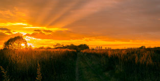 Road to golden sunset. The sun illuminates the tops of the grass Stock Image
