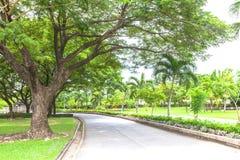 Road to the green garden Stock Photos