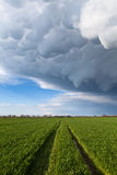 Road to green grass who goes to storm Stock Photography