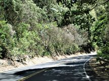 The Road to Hana, Shadows, Plants, and Trees royalty free stock photo