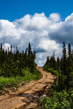 The road to heaven. Forest road rises up to the sky Royalty Free Stock Images