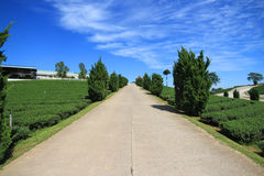 Road to the hill with blue sky background Royalty Free Stock Images