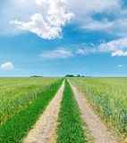 Road to horizon in green fields and blue sky with clouds Stock Photos