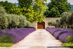 Road to the house with lavender flowers. And gate in the end stock photography