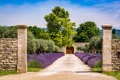 Road to the house with lavender flowers. And gate in the end royalty free stock photos