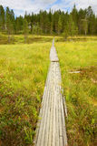 Road to house through swamp (focus on track) Royalty Free Stock Images