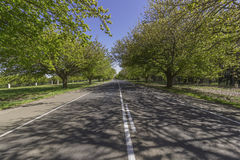 Road to infinity with row of trees beside. Beautiful green trees and grass beside, running along the road Royalty Free Stock Image