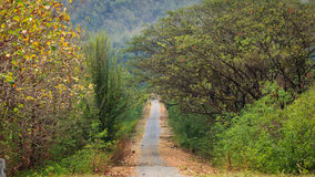 Road to the jungle. Stock Images
