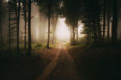 Road to the light in dark mysterious forest