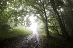 Road to light trough a mysterious forest with fog Stock Photos