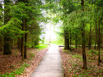 Road to the Light. Wooden Pathway to the Light in the deep Forest of Lithuania Stock Photos