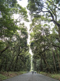 Road to Meiji shrine Stock Photography