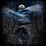 Road to the moon. Mysterious road to the moon. Black cat on the way Royalty Free Stock Photo