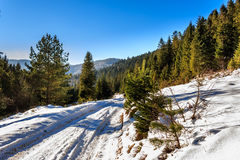 Road to mountain forest in winter Royalty Free Stock Photography