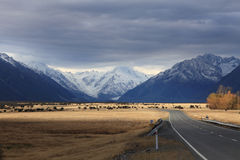 Road to Mt. Cook,South Island New Zealand. Stock Images