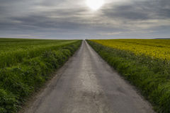 Road to nowhere with crops in fields Royalty Free Stock Photography