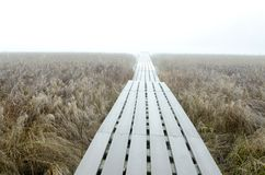 Road to nowhere in the foggy morning royalty free stock image