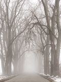 Road to nowhere. One point perspective of a foggy tree lined country road. Tree tunnel. Country road with tall trees arching over. Tree lined road. Foggy road stock photo