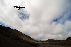 Road to nowhere with silhouette of a falcon - Lanzarote, Canary Island Stock Image