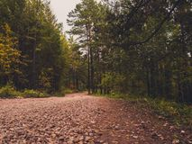 Road to nowhere. Through the woods Stock Photography