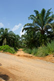 Road to oil palm tree plantation area. Royalty Free Stock Photography