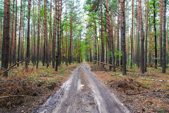 The road to the old forest Royalty Free Stock Image