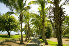 Road to the Pacific ocean through a park with palms. In the Golfo de Papagayo, province Guanacaste, Costa Rica, central America stock images
