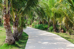 Road to the palm grove Stock Photo