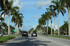 Road to Palm Trees. Nice perspective of rows of Palm trees on both sides of the street Stock Images