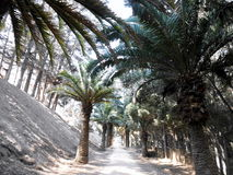 The road to the palm trees Royalty Free Stock Images