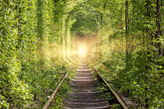 Road to paradise.  Wonders of nature - tunnel of love. Royalty Free Stock Images